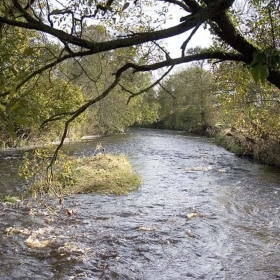 downstream-from-the-old-carry