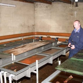 salmon-eggs-in-the-hatchery-development-tanks