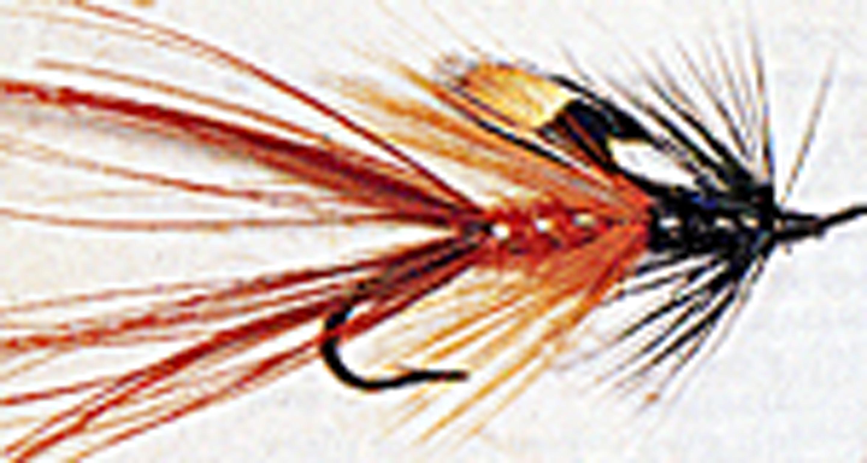 wye-bug